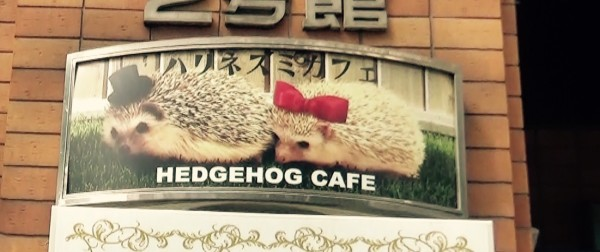 Lets Go To The Hottest Animal Cafe Harry The Hedgehog In The Luggage Tokyo Travel Guide Book